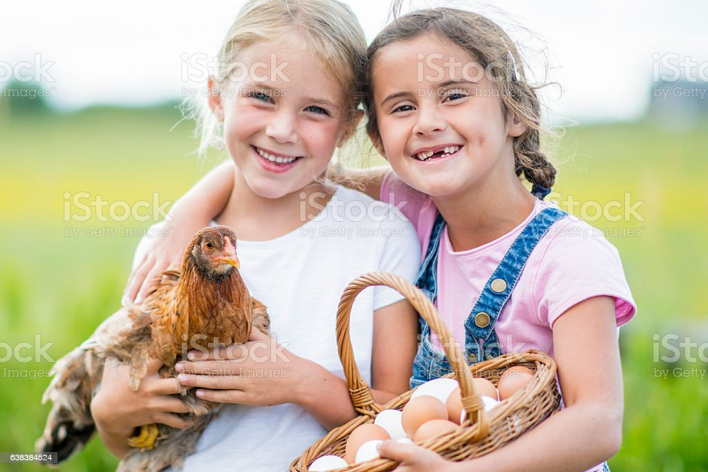 Gathering Eggs on the Farm stock photo