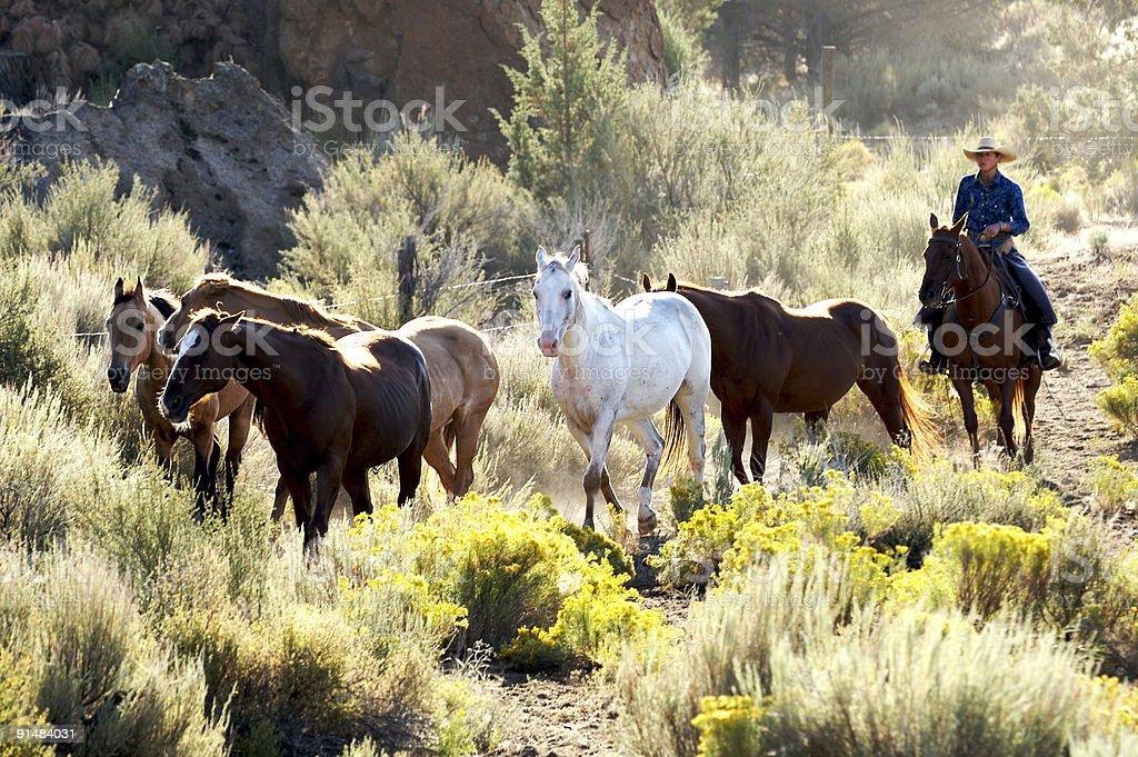 Gathering horses royalty-free stock photo