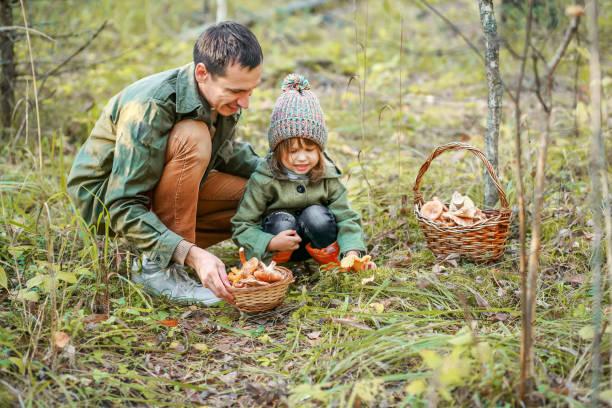 insamling av svamp. - höst plocka svamp bildbanksfoton och bilder