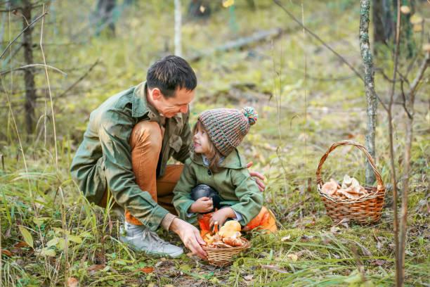Gathering of mushrooms. stock photo