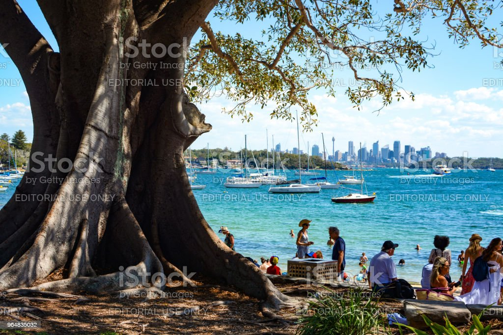 Gathering of people under a large shady tree at the beach in Watson's Bay, with the Sydney skyline in the background royalty-free stock photo