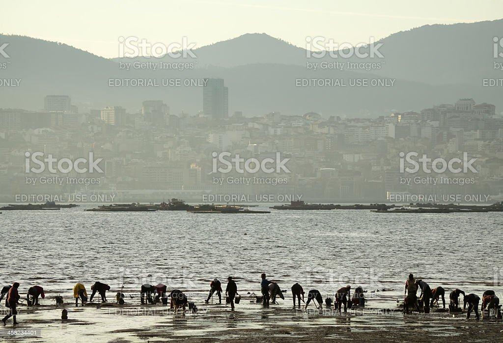 Reunión de mariscos - foto de stock