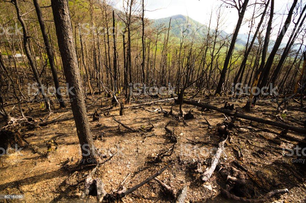 Gatlinburg Wildfire stock photo