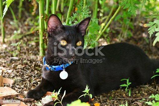 073fcd2e4cec6 Gato Deitado Na Sombra Stock Photo   More Pictures of Domestic Cat ...