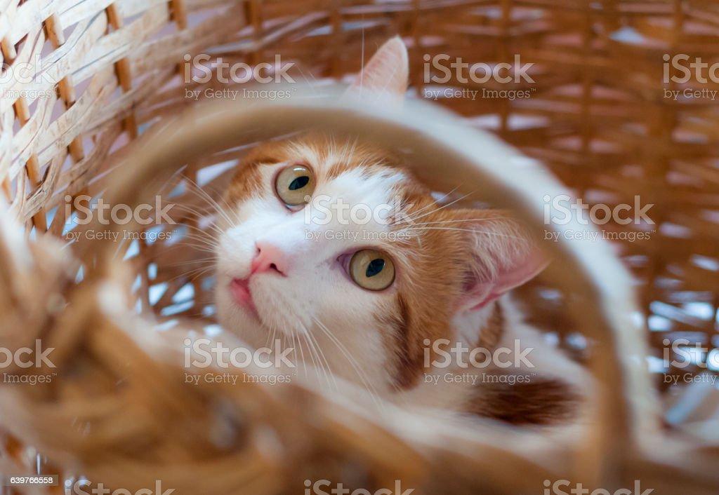 gato  - foto de stock