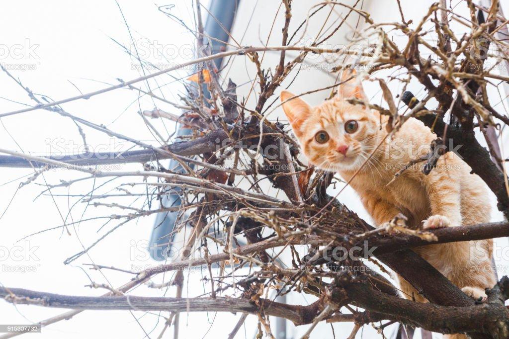 gatto rosso curioso sull'albero - foto di stock immagine - foto stock