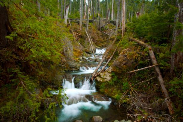 Gatton falls-Olympic National Forest,Washington state – zdjęcie