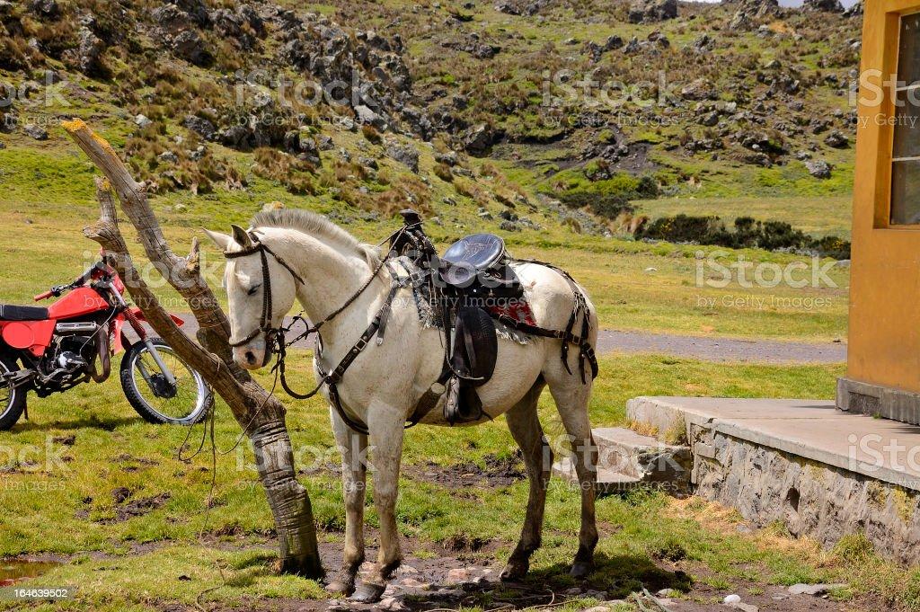 Gaucho Horse And Motorcycle In Ecuador stock photo