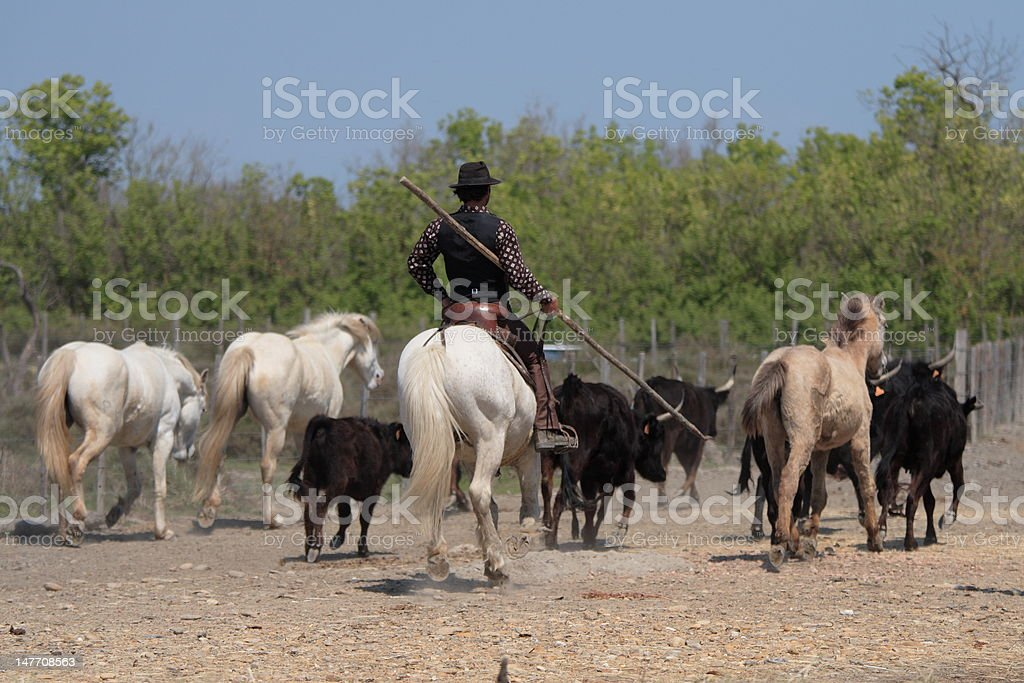 gaucho in camargue stock photo