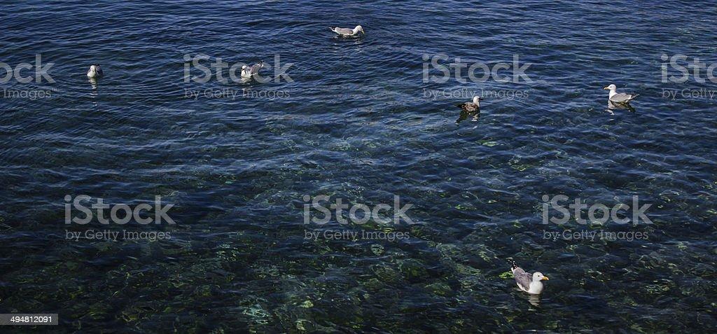 Gaviotas flotando en el mar stock photo