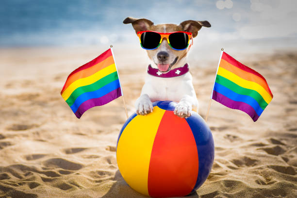 gay dog relaxing on a beach stock photo