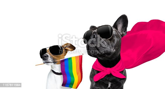 885056264istockphoto gay pride dog 1157811564