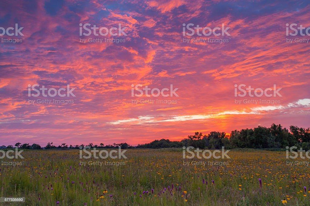 Gayfeather, Yellow Coneflowers, and Red Sunset, Cherokee Prairie, Arkansas stock photo