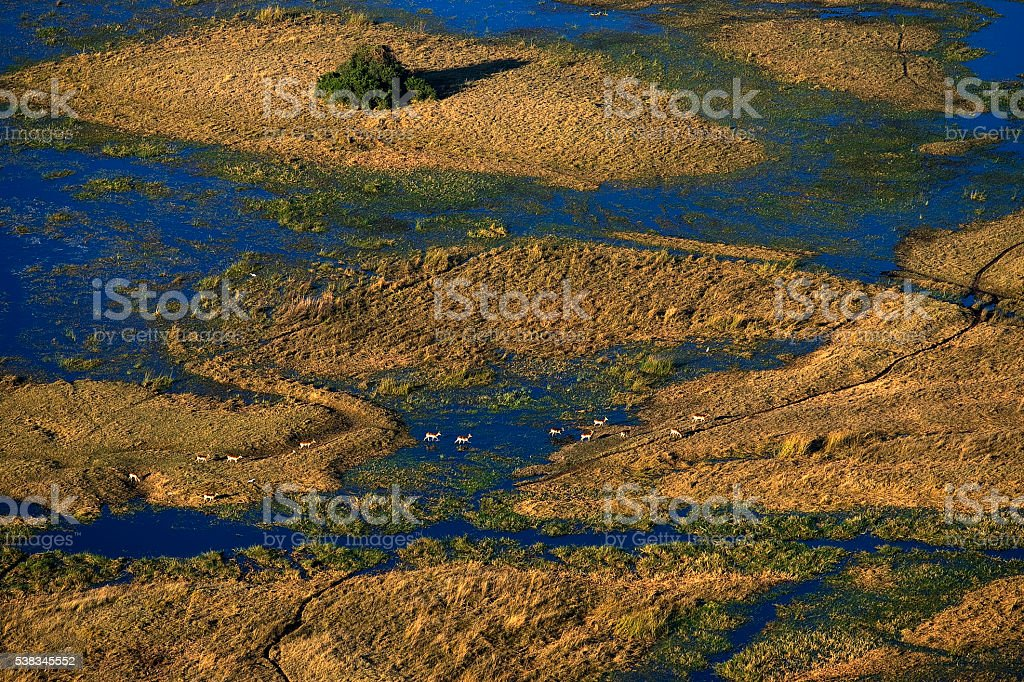 Gazelles on the water at Okavango swamp, viewed from airplane stock photo