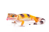 Gecko. Isolated on white background. Vector illustration. Pointillism style.