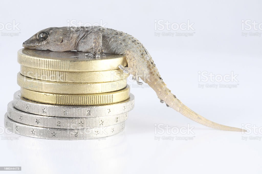 Gecko Lizard and Coin royalty-free stock photo