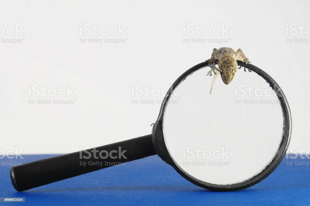 Gecko Lizard and Loupe stock photo