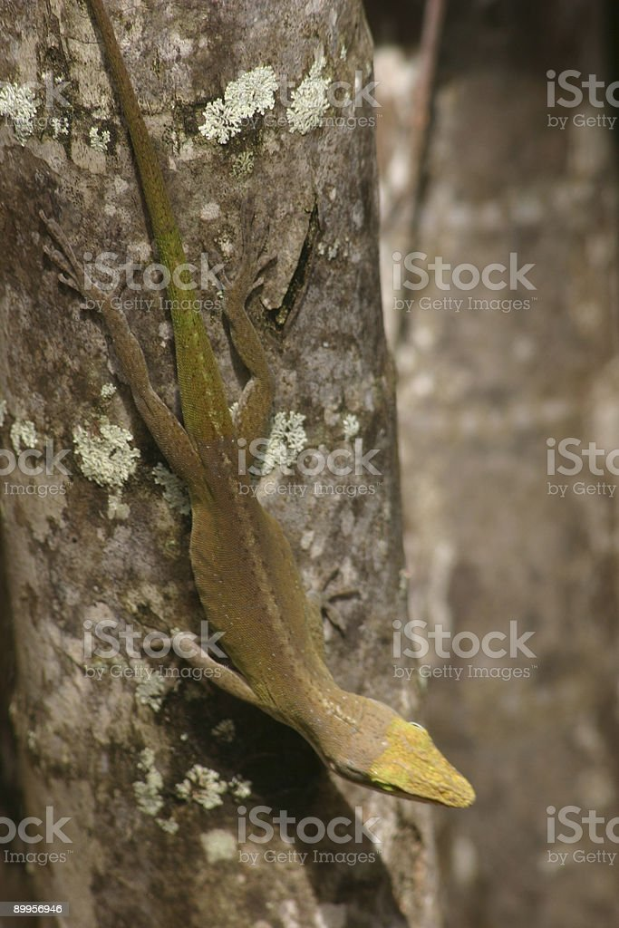 Gecko On Tree stock photo