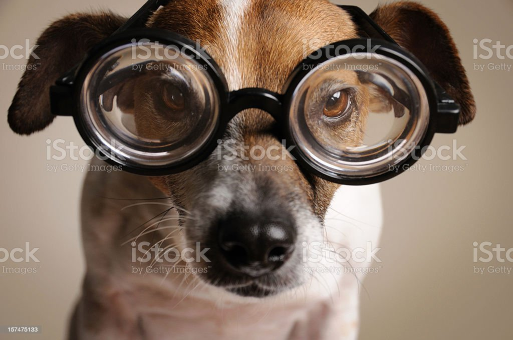 Geeky Dog stock photo