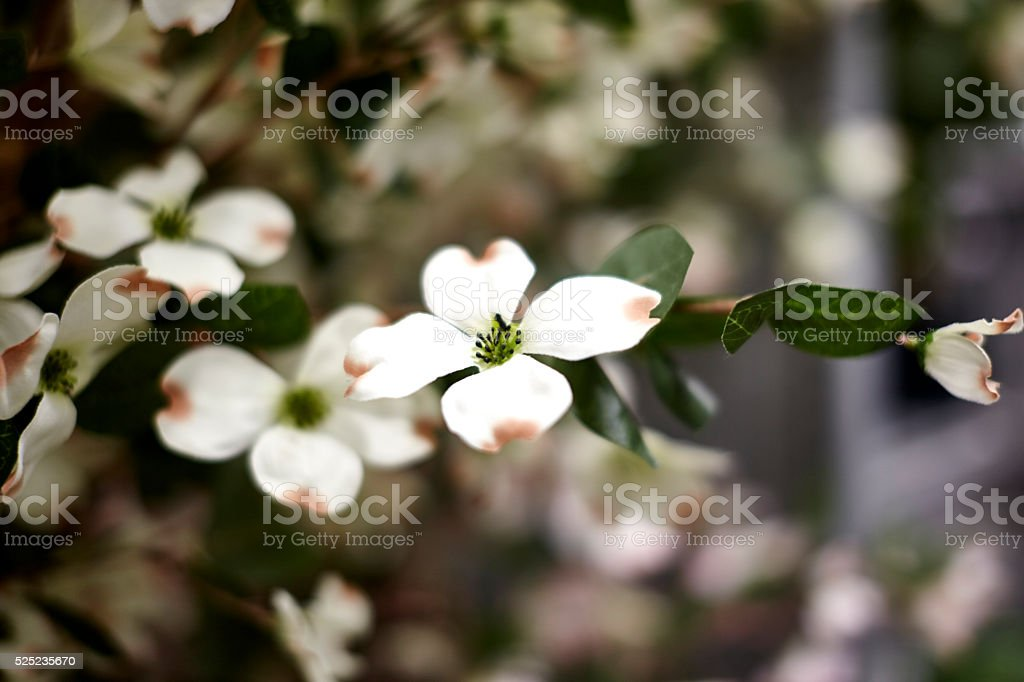 Geen Leaf House Plants stock photo