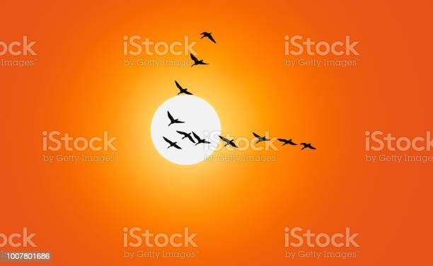 Photo of Geese are flying in v-formation in front of a red sky