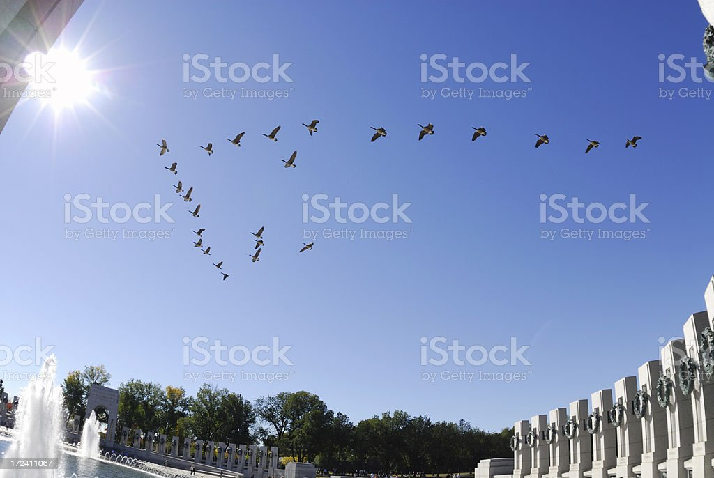 Geese Honor WWII royalty-free stock photo