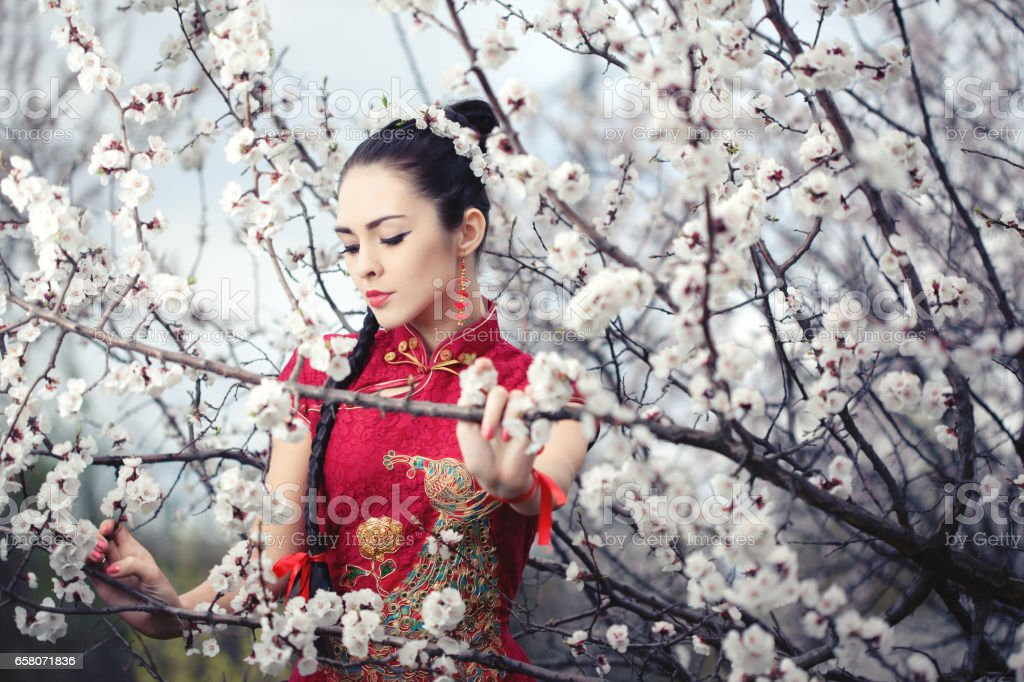 Geisha in red kimono in sakura stock photo