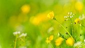 Gelbe Blume mit schönen Bokeh