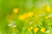 Gelbe Frühlingsblume mit schönem Bokeh