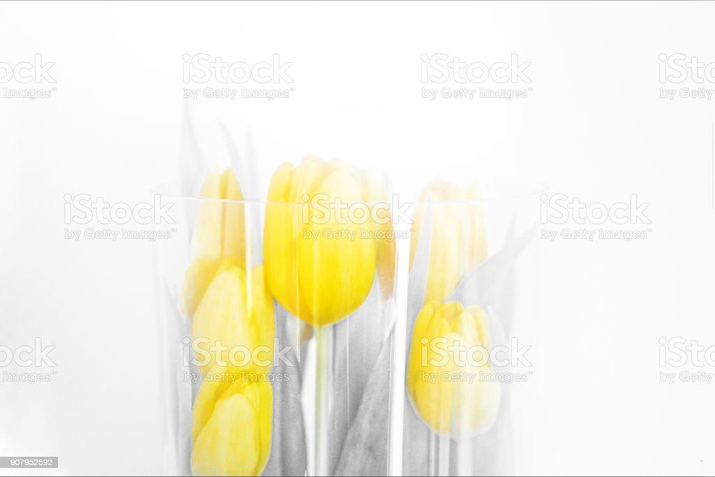 Yellow Tulpen – Foto