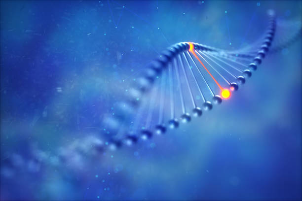 gene editing medical illustrations - adn fotografías e imágenes de stock