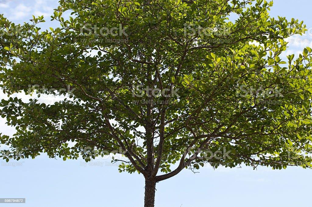 Genealogical Tree Background stock photo