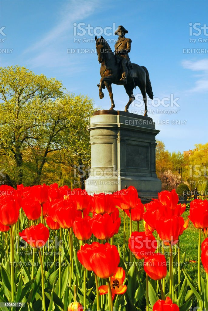 General George Washington in the tulips stock photo