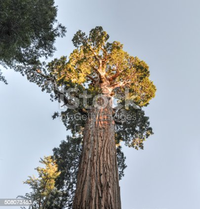 General Grant Tree in Kings Canyon National Park, California