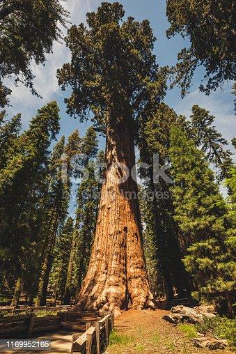 General Sherman tree in Sequoia Park California USA