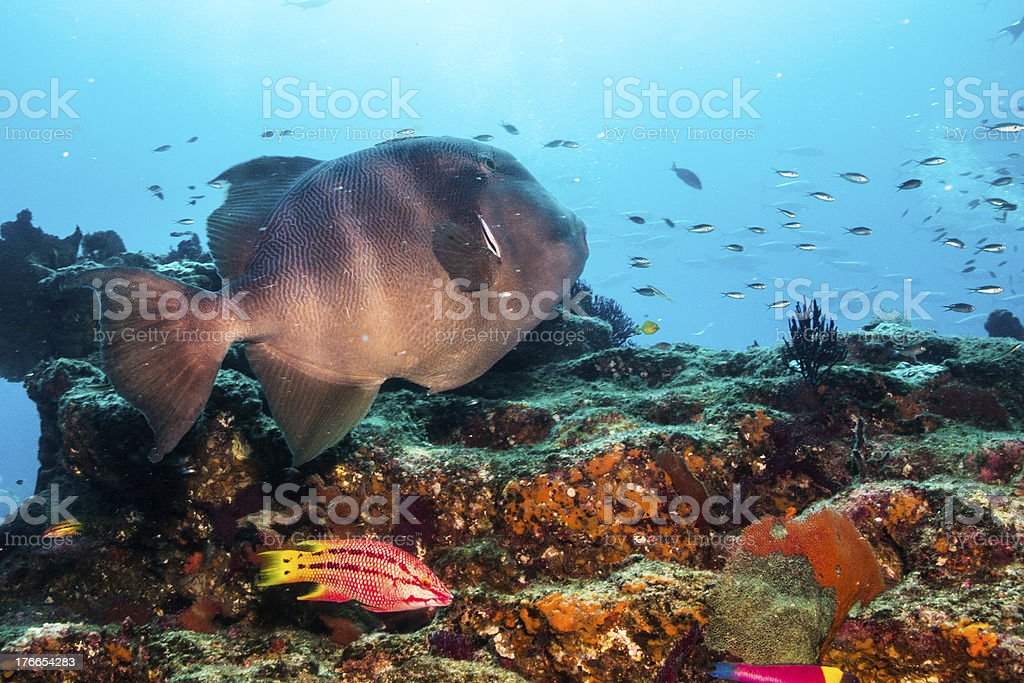 General shots from the reefs of cabo pulmo national park. royalty-free stock photo