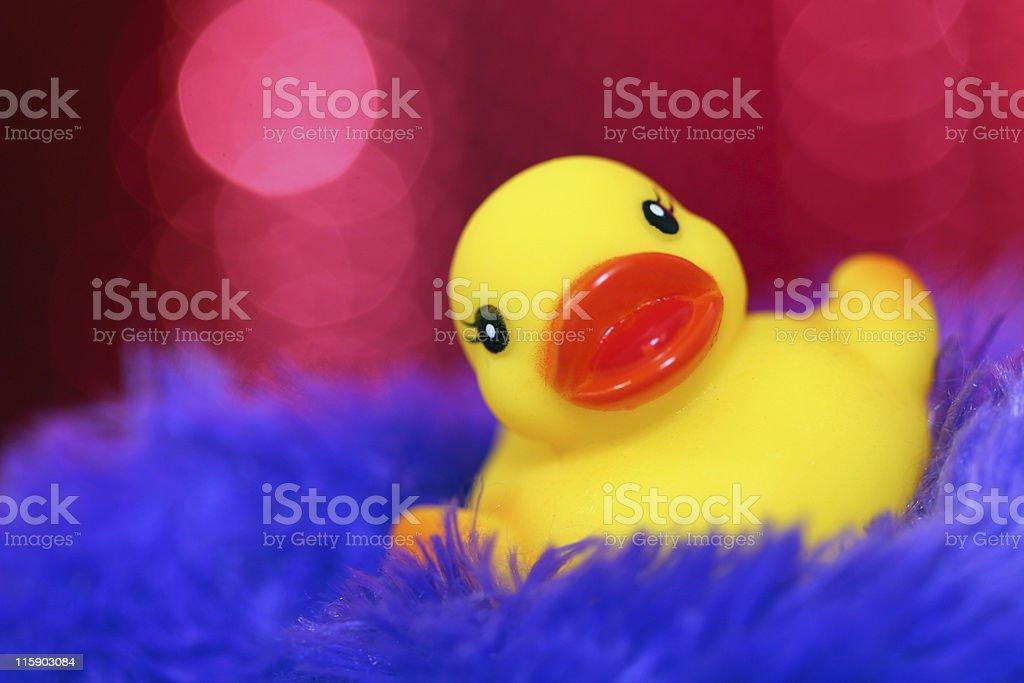 Generic Duck royalty-free stock photo