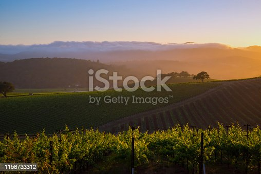 generic vineyard in the Napa valley