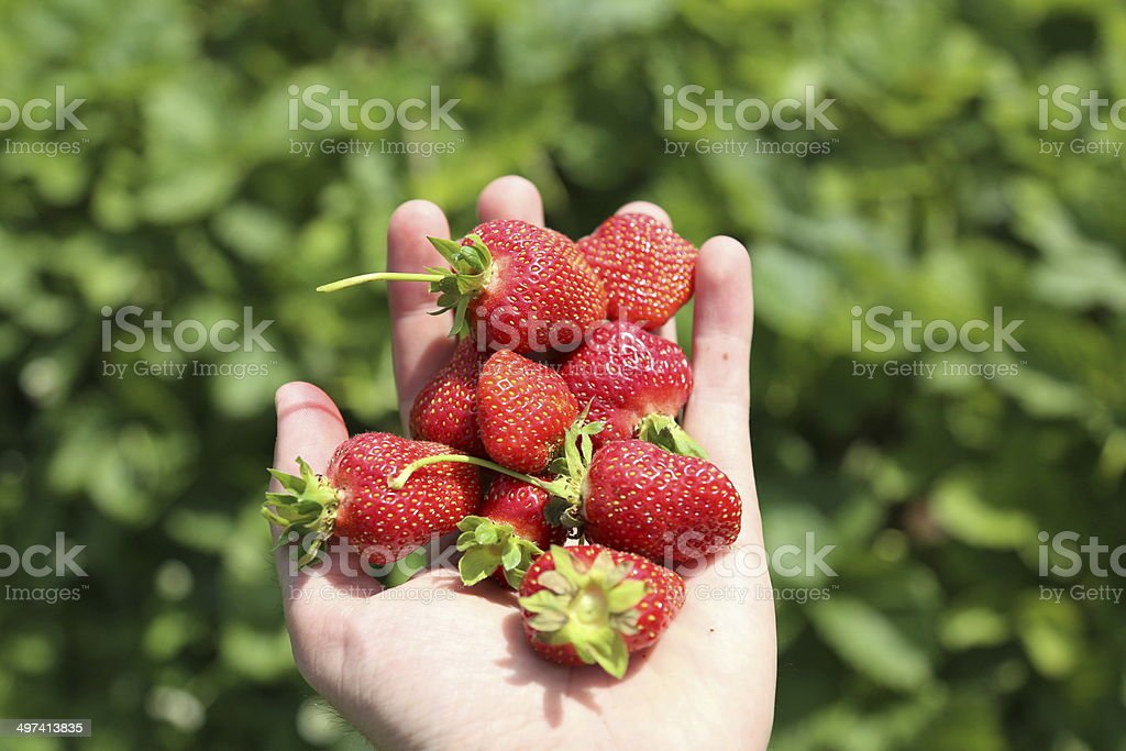 Generosity of hands royalty-free stock photo