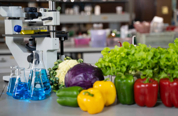 Genetic breeding of vegetables in lLaboratory , analyzing food quality, stock photo