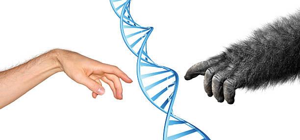 Genetic common ancestry concept for evolution of primates picture id500143519?b=1&k=6&m=500143519&s=612x612&w=0&h=9kyff1jk27wvjgmtrgt5y8oobcbumrniurj pztnoiq=