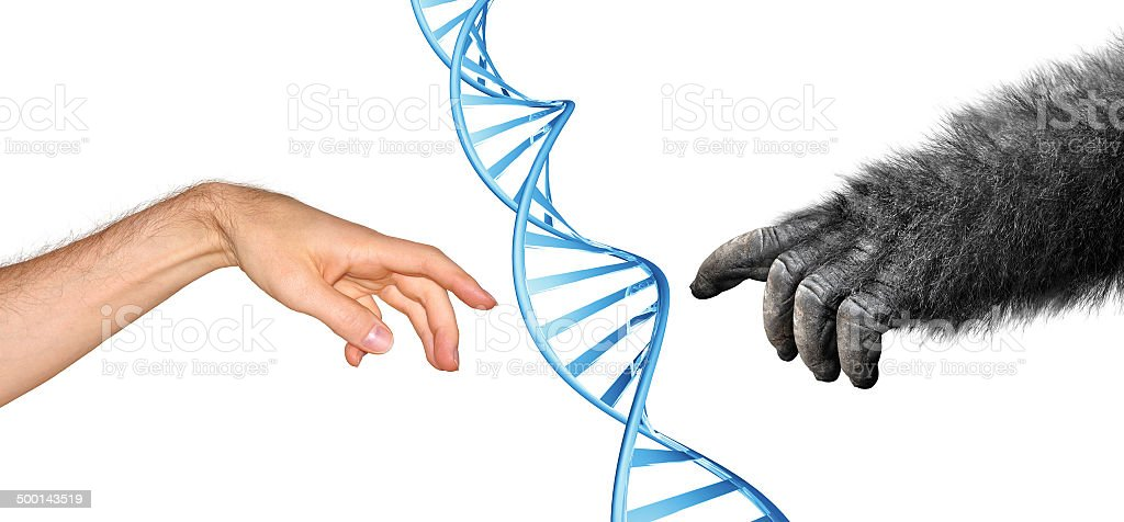 Genetic common ancestry concept for evolution of primates stock photo