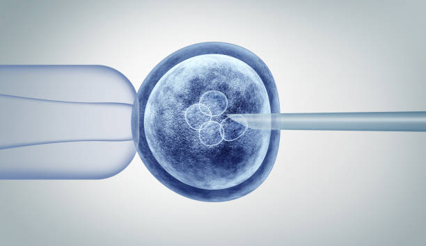 Genetic Editing Genetic editing and gene research in vitro CRISPR genome engineering medical biotechnology health care concept with a fertilized human egg embryo and a group of dividing cells as a 3D illustration. stem cell stock pictures, royalty-free photos & images