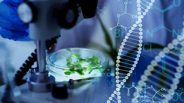 Genetic engineering concept. Medical science. Scientific Laboratory. Genetic engineering concept. Medical science. Scientific Laboratory. crop plant stock pictures, royalty-free photos & images
