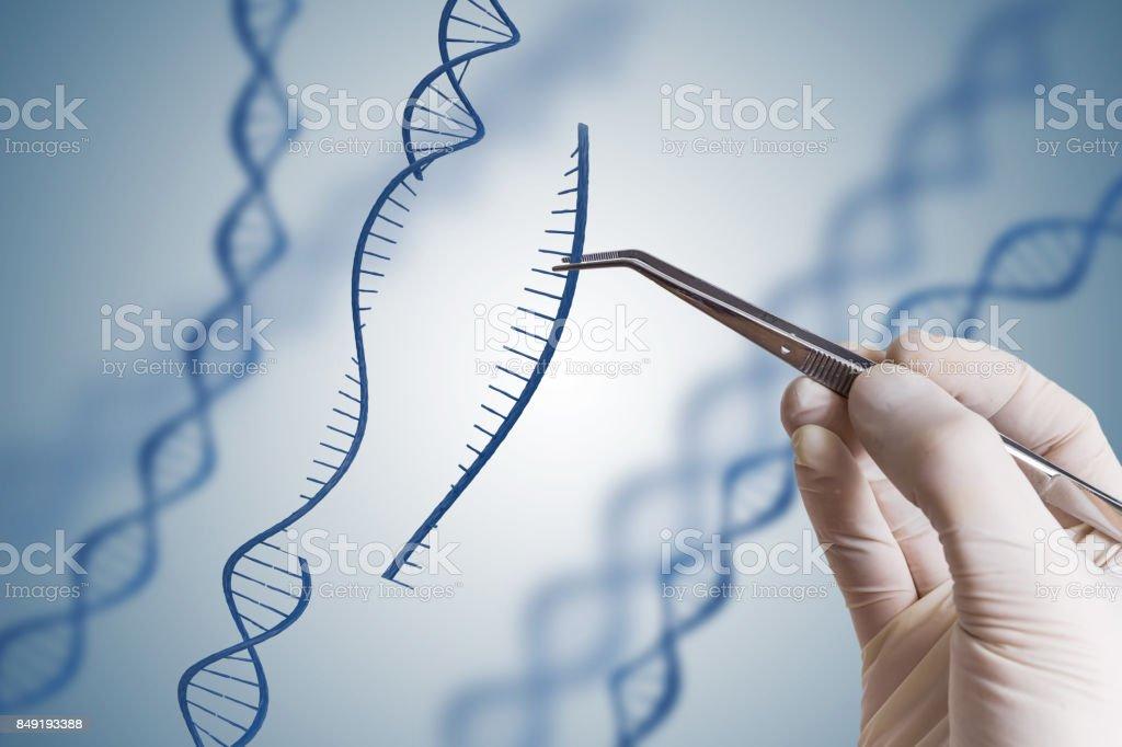 Notion de manipulation génétique, OGM et Gene. Main est mise en place de séquence d'ADN. - Photo