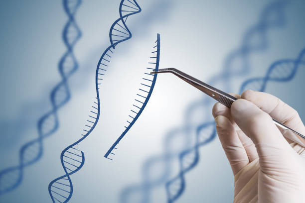 Genetic engineering, GMO and Gene manipulation concept. Hand is inserting sequence of DNA. stock photo