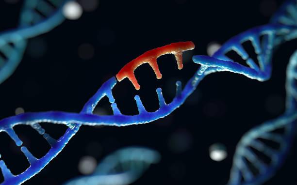 genetic engineering - rna foto e immagini stock