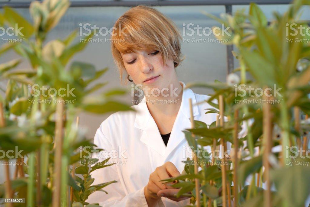 Genetic engineering royalty-free stock photo