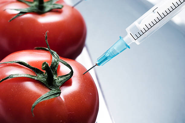 genetic experiment - genetic modification stock photos and pictures