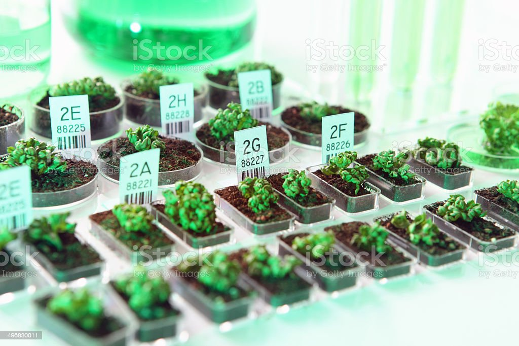 Genetic laboratory: genetically modified organism, plants and seeds, DNA experiment stock photo
